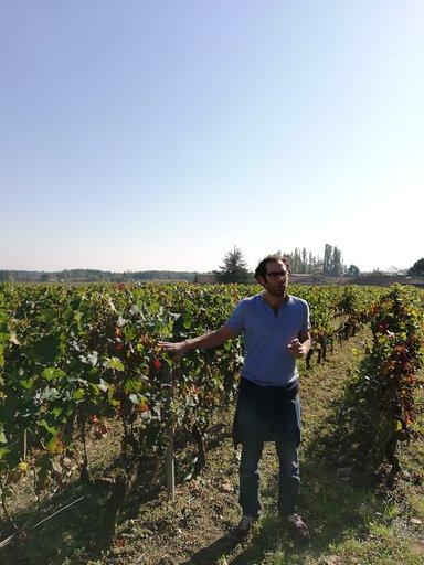 купить виноградник во франции регион бордо