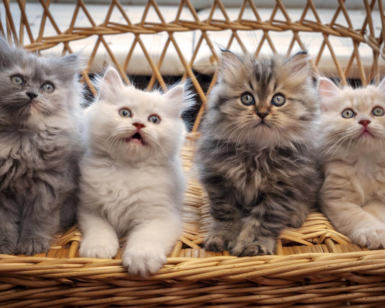 Альбом «дружелюбной» музыки для кошек презентовали в Лондоне