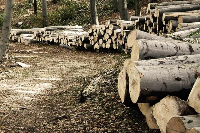 Украина рухнула спервого напоследнее место вевропейских странах поколичеству леса