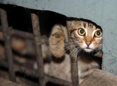 Женщина погладила бездомного кота и погибла