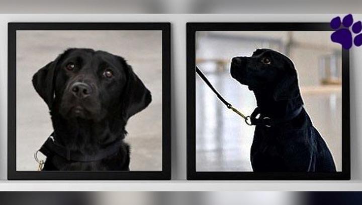ЦРУ уволило служебную собаку из-за потери интереса кработе