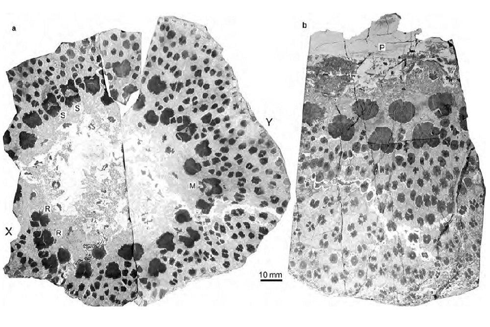 Палеонтологи обнаружили останки потенциально древнего дерева наЗемле