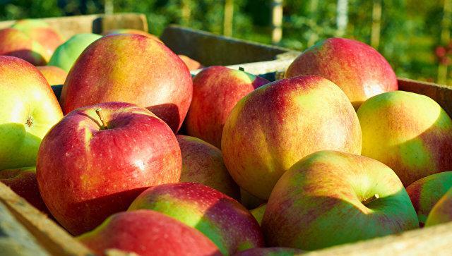 Ученые рассказали, как нужно правильно мыть яблоки