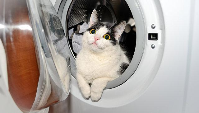 В Норвегии кот выжил после 40 минут в работающей стиральной машине