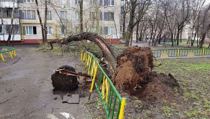 Ураган в Москве повалил сотни деревьев: пострадали дети